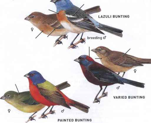 Colorado Bird Identification Guide