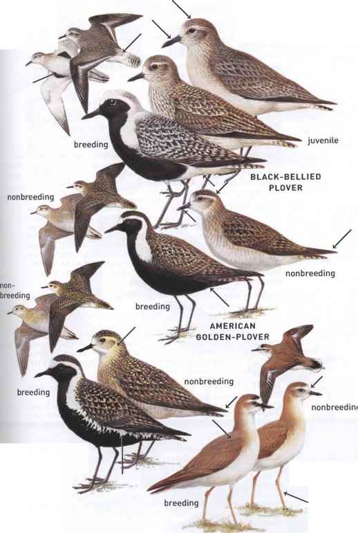 How Many Americans Bird Watch