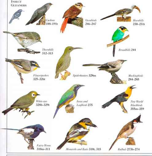 Migratory Birds List With Names