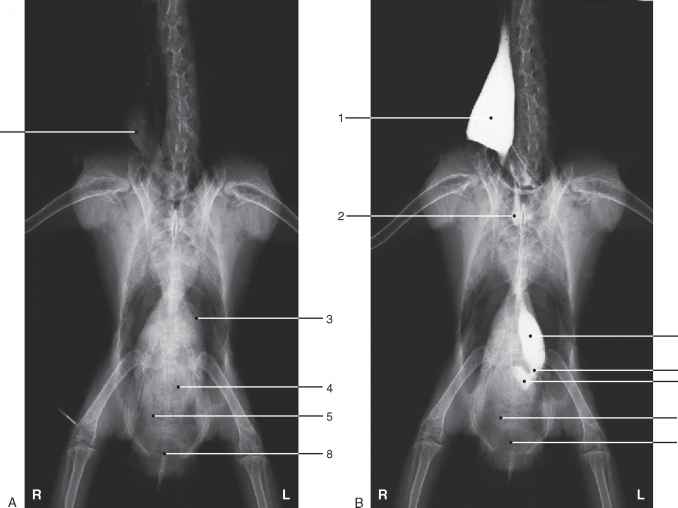 Esophageal Cockatoo